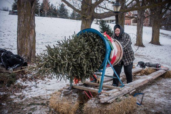 to-kill-a-christmas-tree-11