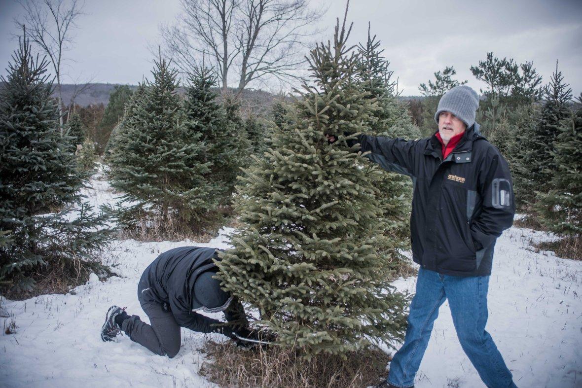 to-kill-a-christmas-tree-7