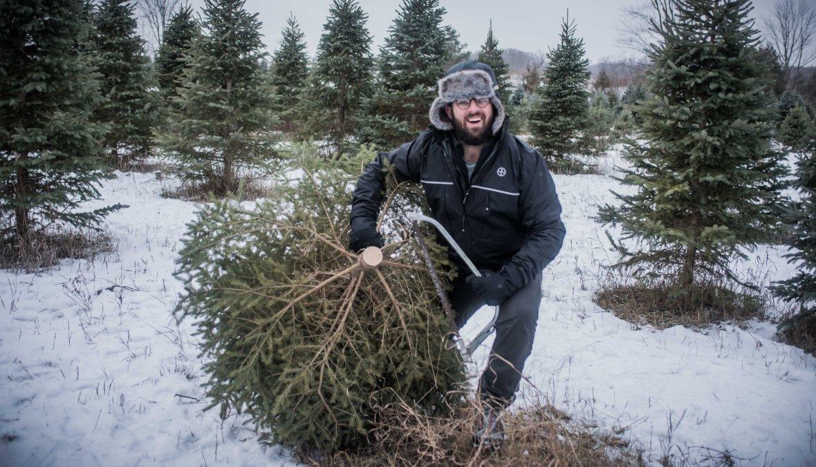 to-kill-a-christmas-tree-8